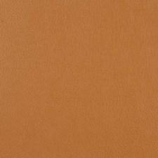 276717 15518 598 Camel by Robert Allen