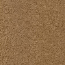 Mustang Drapery and Upholstery Fabric by Schumacher