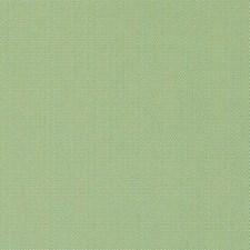 378563 15683 554 Kiwi by Robert Allen