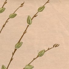 Natural/green Drapery and Upholstery Fabric by Highland Court