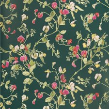 Cerise/Magen/Vrdn Print Wallcovering by Cole & Son Wallpaper