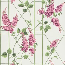 Magenta/Green/Wh Print Wallcovering by Cole & Son Wallpaper