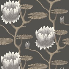 Blk/Wht/Gold Botanical Wallcovering by Cole & Son Wallpaper