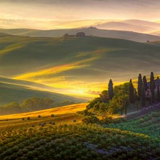 DM978 Toscana Wall Mural by Brewster