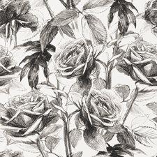 Black/White Wp Floral Medium Wallcovering by Clarke & Clarke